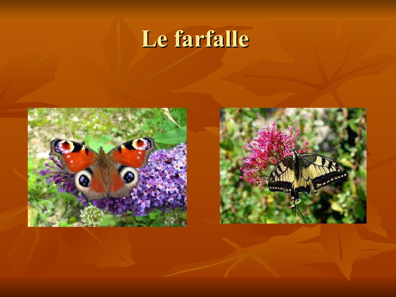 Presentazione-giardino-della-Cocla12