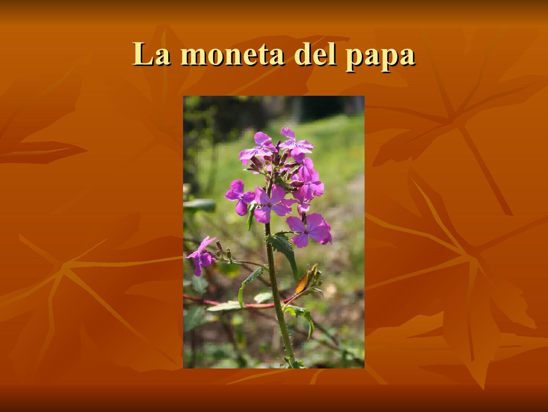 Presentazione-giardino-della-Cocla14
