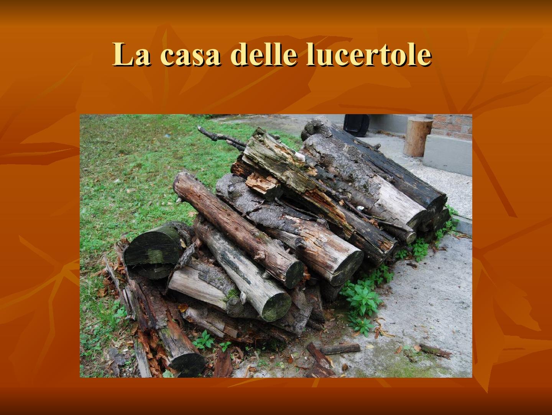 Presentazione-giardino-della-Cocla22