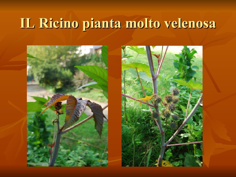 Presentazione-giardino-della-Cocla26