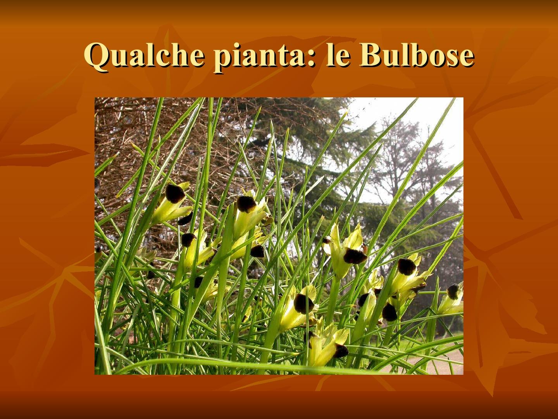 Presentazione-giardino-della-Cocla34