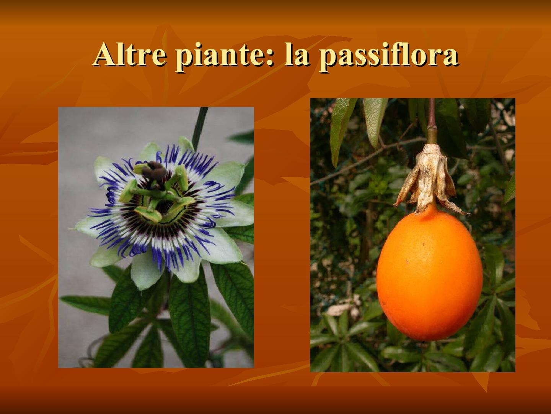Presentazione-giardino-della-Cocla37