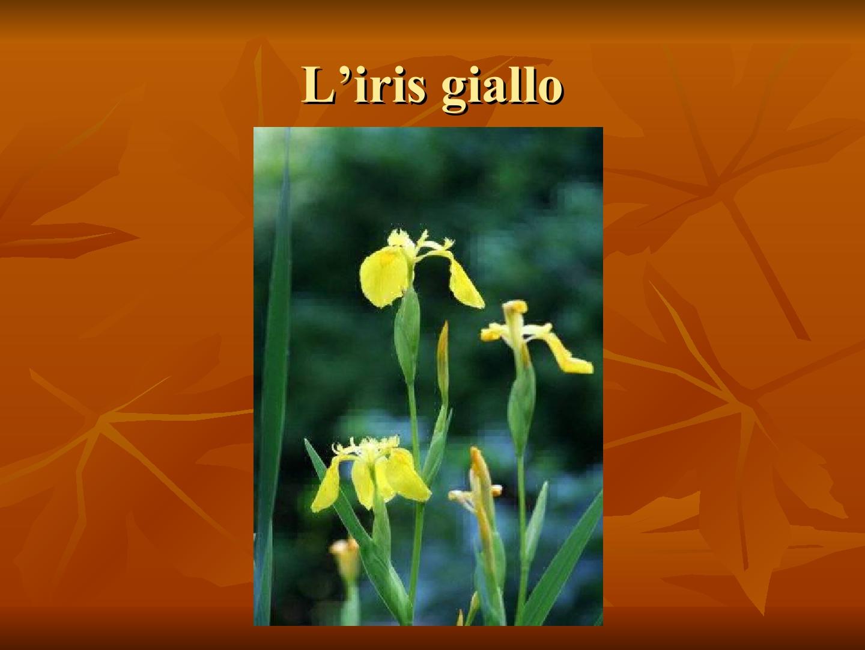 Presentazione-giardino-della-Cocla8