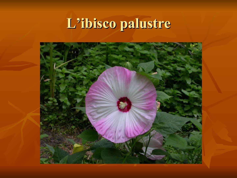 Presentazione-giardino-della-Cocla9