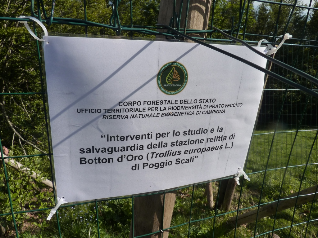 Gev a Sasso Fratino (2)