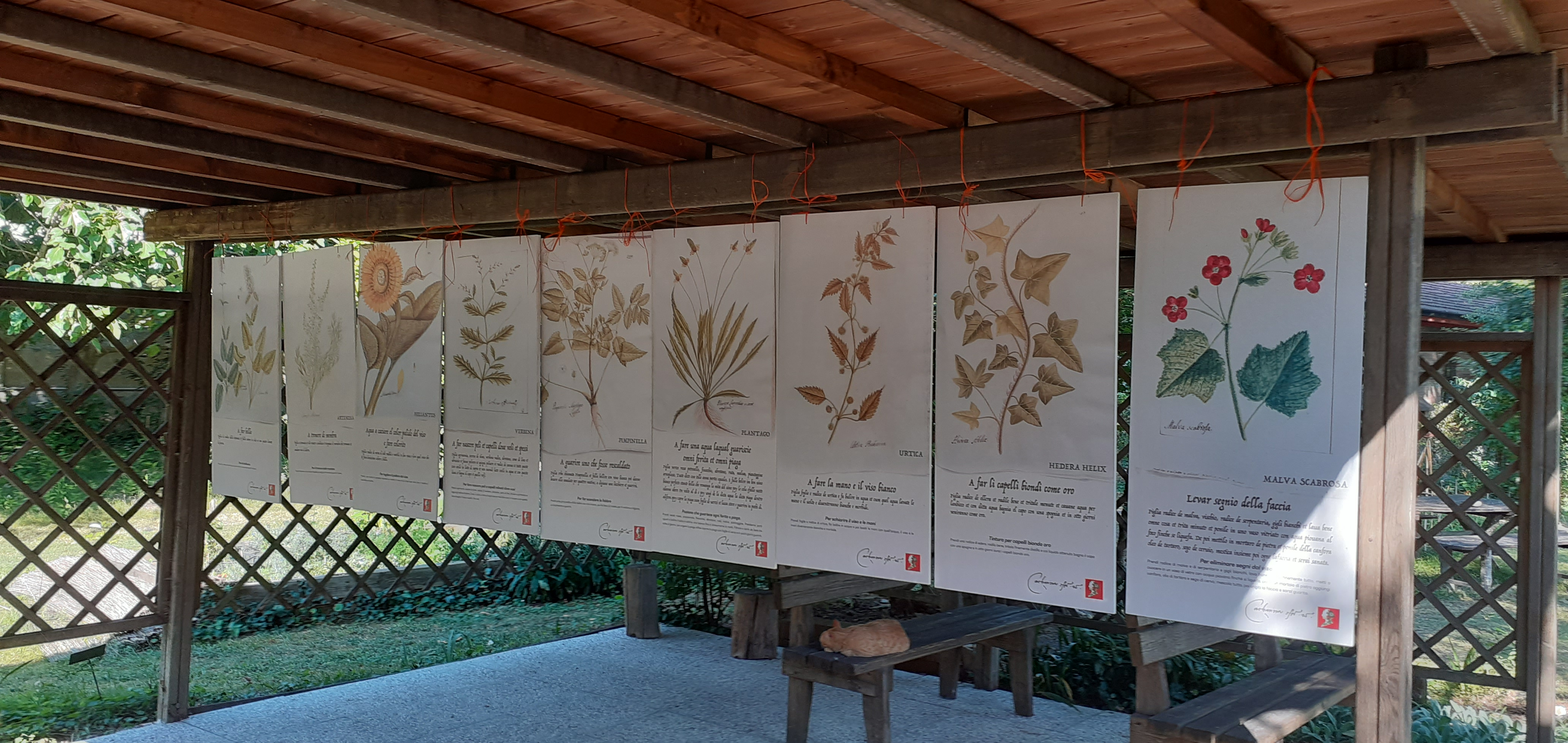 Cocla-13-giu-21-3-Tavole-botaniche-Maioli