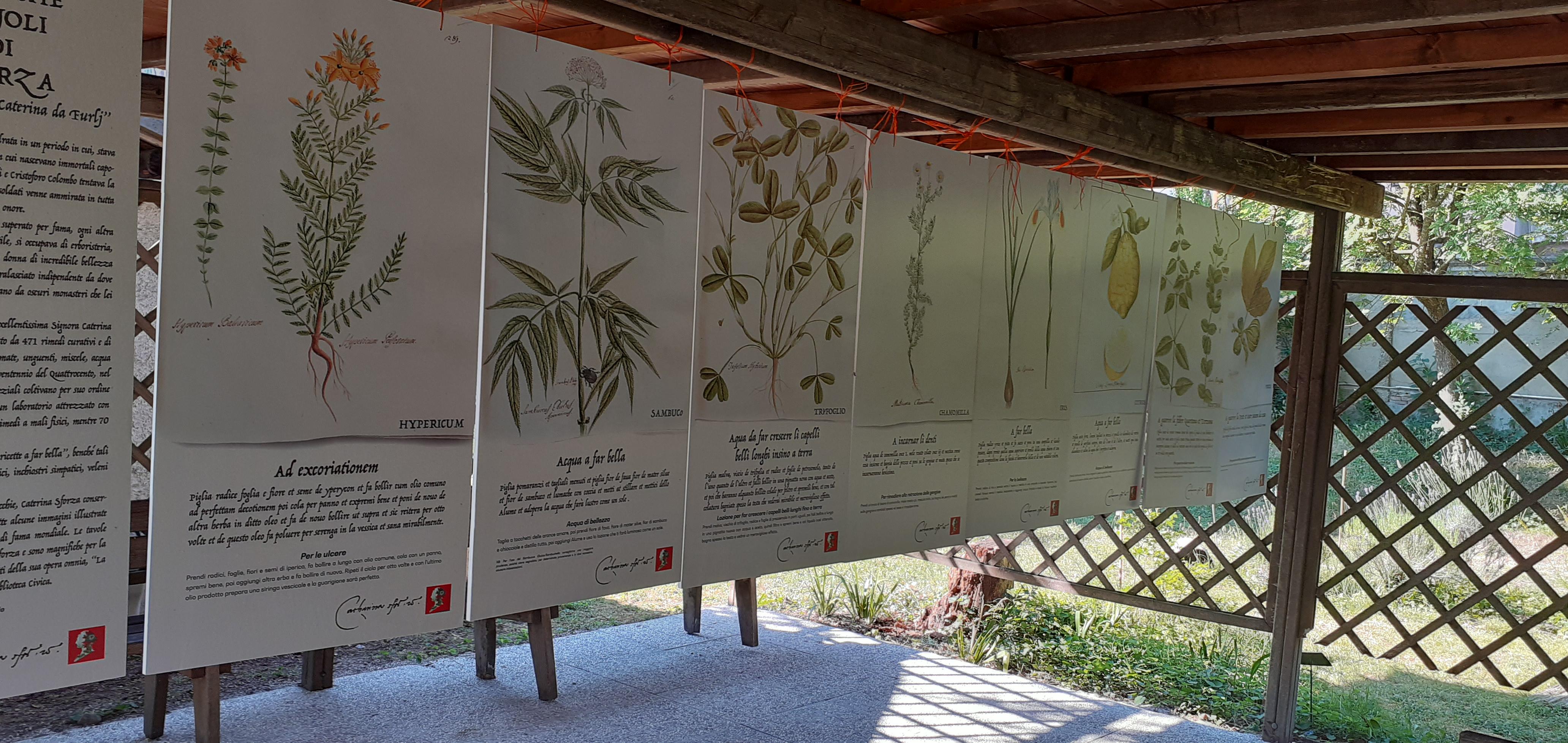 Cocla-13-giu-21-3_-Tavole-botaniche-Maioli