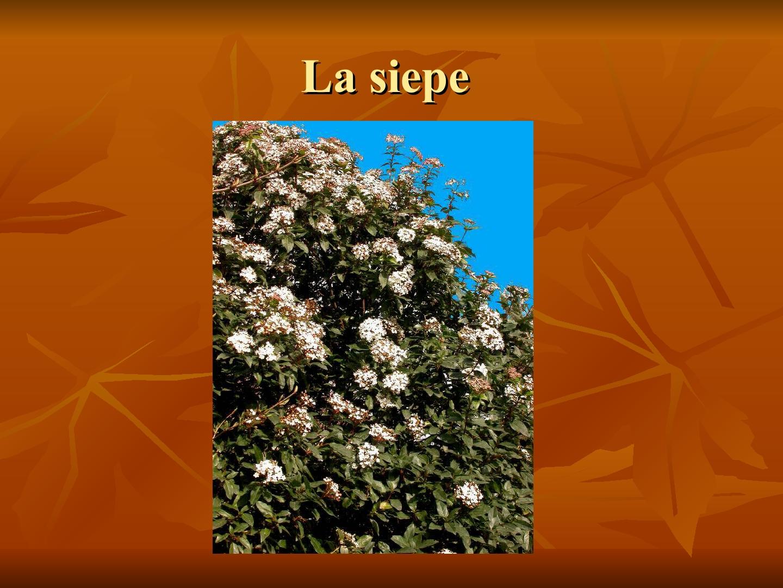 Presentazione-giardino-della-Cocla10