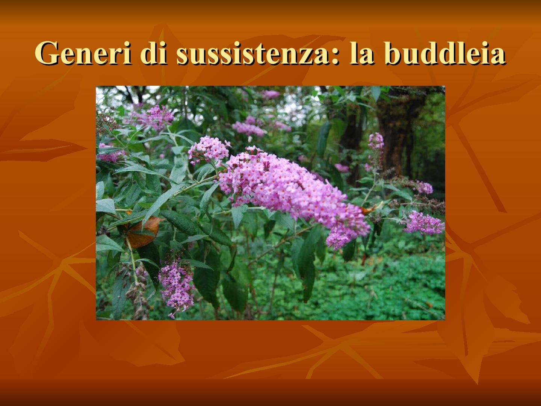 Presentazione-giardino-della-Cocla13