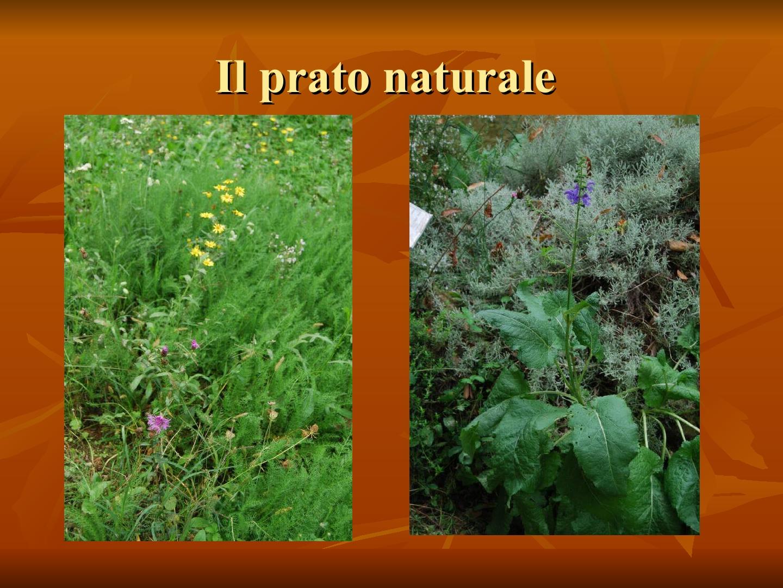Presentazione-giardino-della-Cocla15