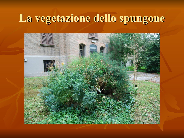 Presentazione-giardino-della-Cocla16