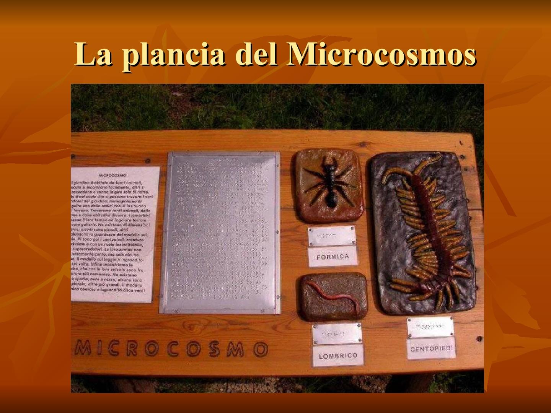 Presentazione-giardino-della-Cocla17