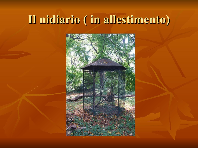 Presentazione-giardino-della-Cocla18