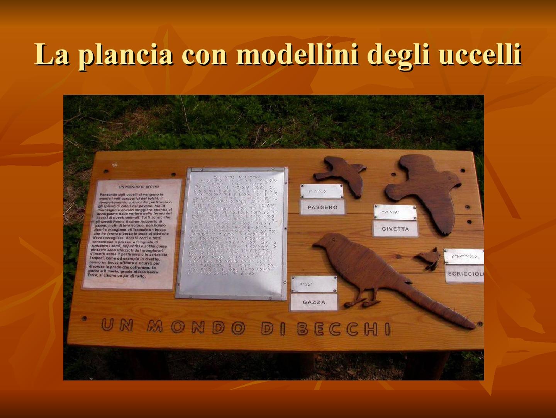 Presentazione-giardino-della-Cocla19