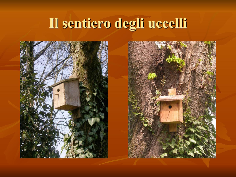 Presentazione-giardino-della-Cocla20