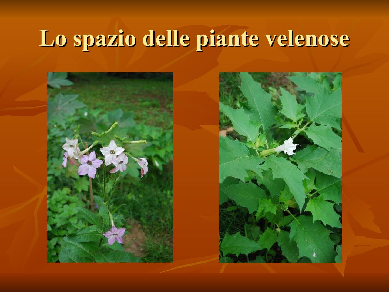 Presentazione-giardino-della-Cocla25
