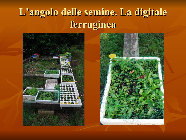 Presentazione-giardino-della-Cocla27