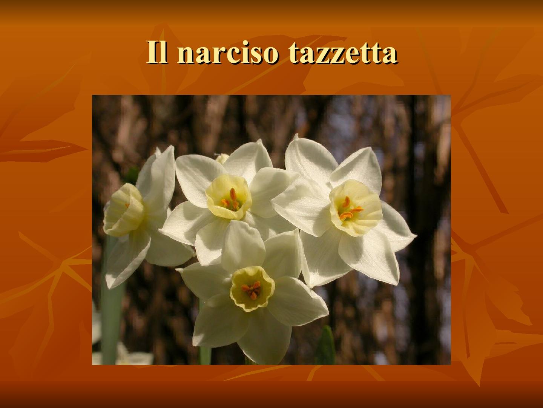 Presentazione-giardino-della-Cocla36