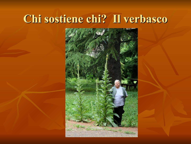 Presentazione-giardino-della-Cocla41