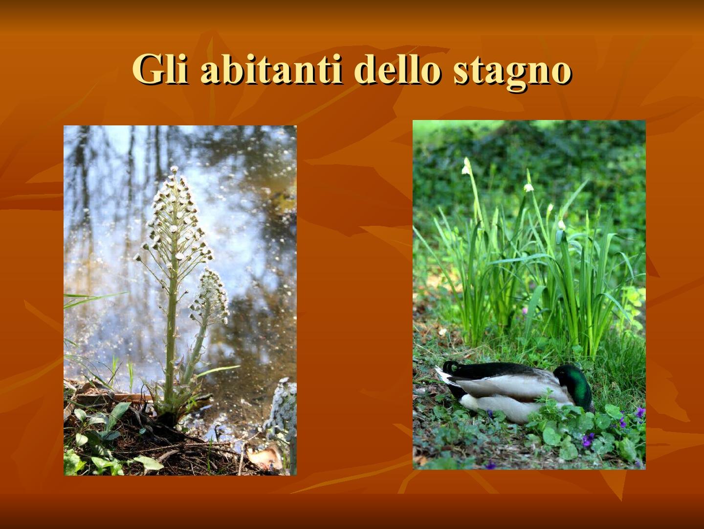 Presentazione-giardino-della-Cocla5