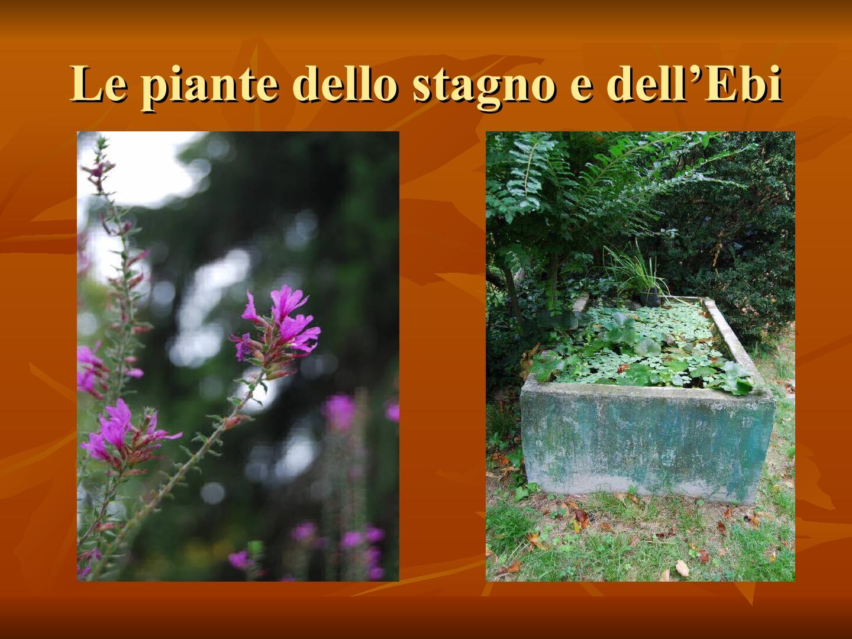 Presentazione-giardino-della-Cocla6